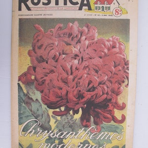 1948, French review, RUSTICA, pink chrysanthemum, antique French flower illustration