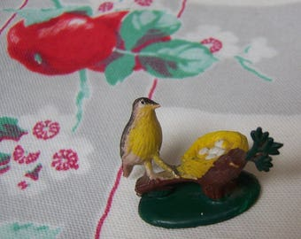 wee tiny bird with nest