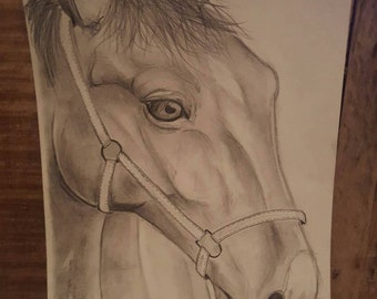 Horse Drawing - Unframed