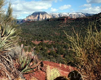 Sedona Desert Landscape Photography Nature - Fine Art Photography Cactus & Red Earth - Winter Mountain Photography - Southwest Wall Decor