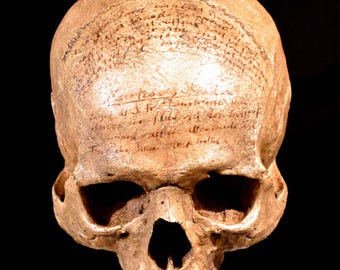 Descartes Skull Replica