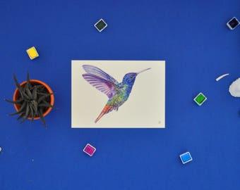 humming bird card-carte colibris -carte imprimée,aquarelle,watercolor,artwork,home decoration, art print, illustration ,painting, drawing