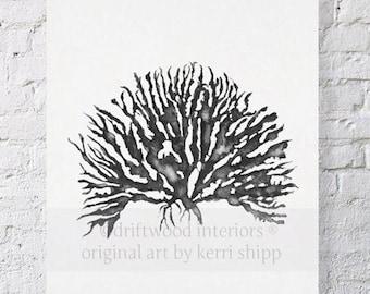 Sea Coral in Charcoal IV Print