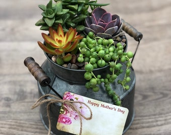 Succulent Arrangement - Rustic Milk Can