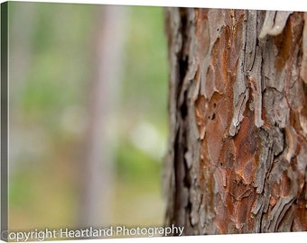 Nature Photography, Nature Canvas, Boundary Waters, Red Pine Tree Bark, Tree Canvas Art, BWCA Photo Canvas, Tree Bark Photo, Minnesota Photo