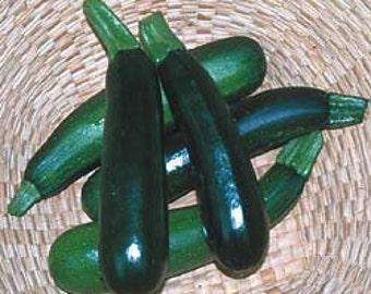 Squash - Zucchini Black Beauty - Heirloom - 20 Seeds