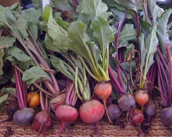 Custom Beet Mix Heirloom Seeds Grown To Organic Standards