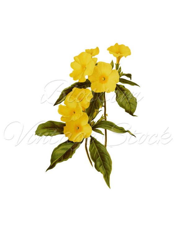 Yellow Flower Print, botanical wall art, botanical print, botanical ...