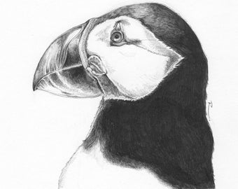 The Puffin GICLÉE PRINT & ORIGINAL - Drawn By Rosie