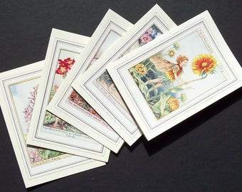 Five  Flower Fairy Cicely Mary Barker blank greetings or note cards (Garden Mix)