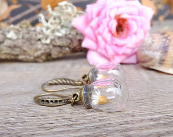 Daisy earrings, gift for woman, boho earrings, real flower jewelry, terrarium earrings, dainty earrings, dried flowers, glass drop earring