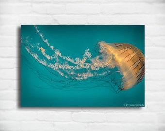 "Teal Jellyfish Canvas Art - striped orange jellyfish gallery wrap  8x12 underwater jellyfish photo 16x24 large wall art 24x36 ""Ephemeral"""
