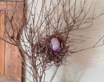 Birds Nest Branch