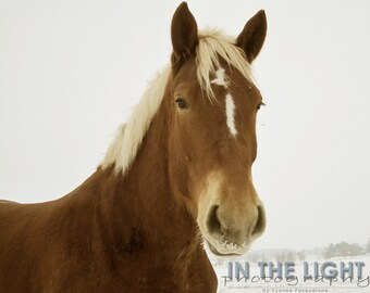 CLEARANCE - Horse Portrait - 8x10 fine art photography