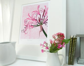Pink Flower Wall Art Print, Nerine - mounted floral giclee print