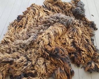 Purebred Coopworth Fleece Ewe 2099