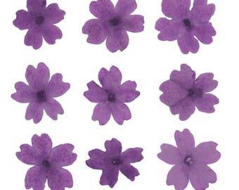 Pressed flowers, purple verbena 20pcs floral art, craft, card making, scrapbooking