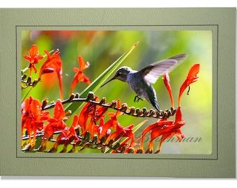 Hummingbird Photo Greeting Card - Bird Card Blank Inside - Blank Hummingbird Note Card - Orange Green Bird Photo - Anna's Hummingbird Card