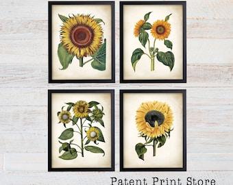 Sunflower Botanical Art Prints. Sunflower Decor. Botanical Print. Botanical poster. Botanical Illustration. Botanical Art. Farmhouse. 211