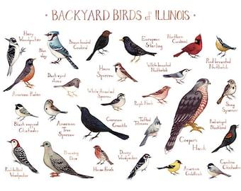 Illinois Backyard Birds Field Guide Art Print / Watercolor Painting / Wall Art / Nature Print / Bird Poster