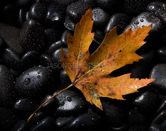Leaf Photography, Autumn Still Life, Digital Download Photography, Instant Download, Wall Art, Home Decor, Office Decor, Still Life