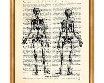 Anatomy Art, Anatomy Gift, Anatomy Print, Anatomy Poster, Vintage Anatomy Skeleton, Art Print Home Decor, Gift For