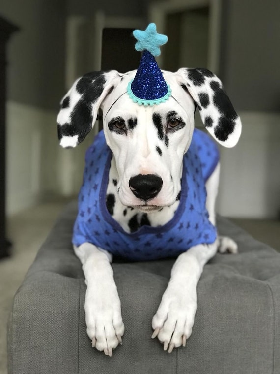 Dog Birthday || Dog Costume || Dog Birthday Hat || Dog Party Hat || Dog Birthday Party || Dog Clothes || Dog Crown