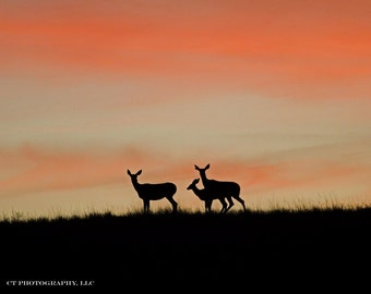 Deer in Sunset in Montana, Original Fine Art Photography