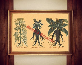 214# Mandrake print, witch plant illustration, mandragora poster, occult print, witch home decor, magick print, kitchen wall decor, herbs
