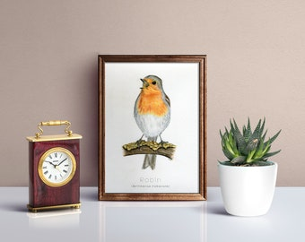 Robin, bird portrait/illustration - art print