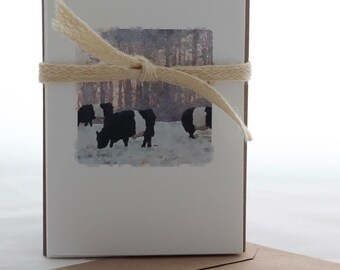 BELTIE COWS SET, Watercolor Image, Set Five Cards, Blank Greeting Card, Fold Over Card