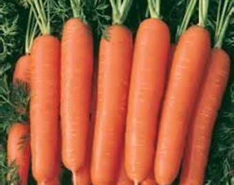 Carrot Seeds - Scarlet Nantes Carrots - Heirloom Carrot Seeds - Non GMO Seeds - David's Garden Seeds