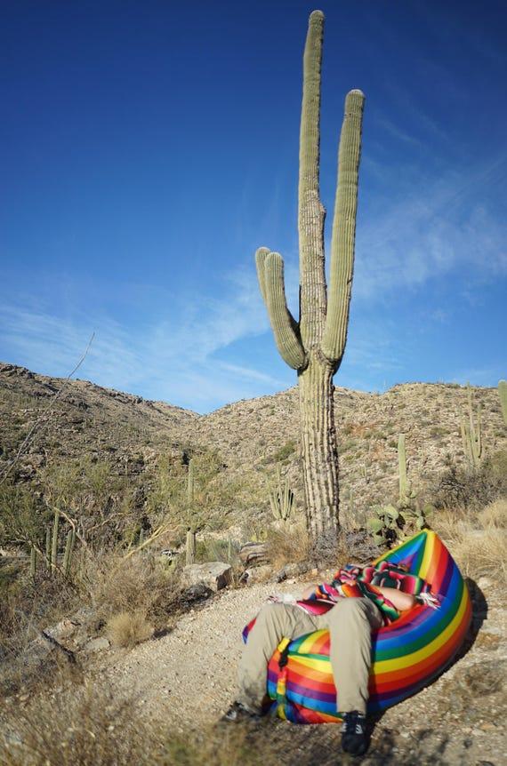 Cactus Nap