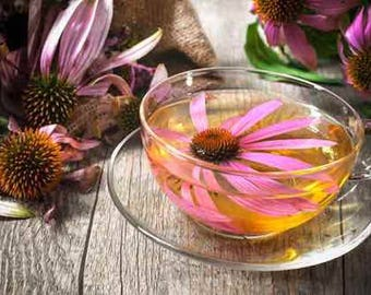 Echinacea 1,000+ Seeds - Purple Coneflower - Flower Seed - Canada - 7 Grams