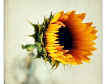 thanksgiving decor // photography // sunflower art // golden yellow orange decor - Sunflower, 20x20 photograph print