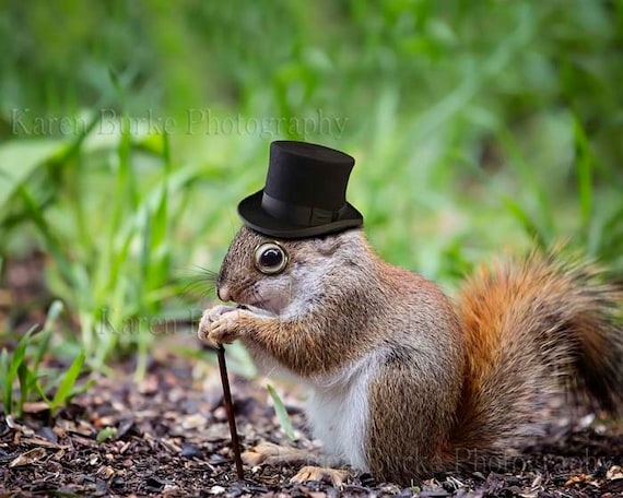 Funny Red Squirrel Black Top Hat Monocle Cute Animal Print