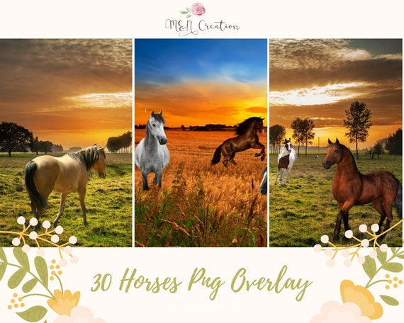 30 Horses Overlays Animal Photo Photoshop Photography Backgrounds Transparent Horse Country Digital Backdrop PNG