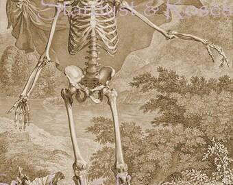 ANTIQUE Art Print 1700s Skeleton Death & Life - INSTANT DIGITAL Download - Vintage Anatomy Cherub Altered Art to Frame Arts Crafts NO3419