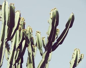 Cactus Photography Poster Print Cactus Poster Print Arizona Desert Photo Saguaro Succulent Print Cactus Print Sonoran Desert Photography