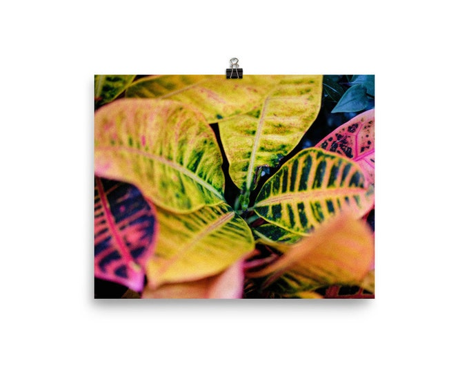 Nature Photography, Nature Print, Nature Wall Art, Retro Art, Colourful Print, Large Botanical Print, Wall Art, Rainbow Art, Leaves, Garden