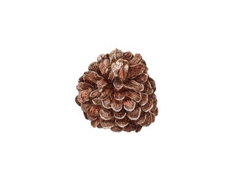 Pinecone ink drawing, Digital image for personal use or work correspondence