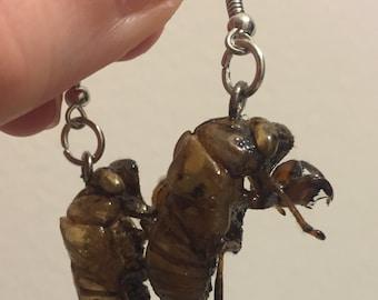 Cicada Shell Earrings