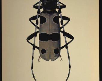 Beetle Wall Decor Insect Print Nature Art Bug Vintage