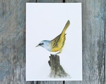 Bird art print 5x7 inches, audubon bird watercolor painting gift for bird lover, yellow rustic home decor, minimalist office wall artwork