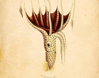 Vintage Squid Print 8x10 P320