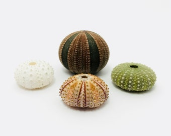 Sea Urchin, 4pcs, tiny Sea Urchin, sea urchin pink, White Sea Urchin, Urchin shell, sea urchin shell, sea urchin test, test, small sea urchin