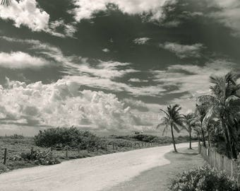 Road Miami Bch. Palms  Photography Black and white Print Florida