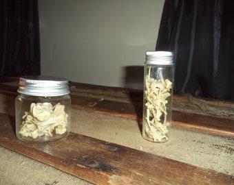 Jar of Small Rabbit Bones