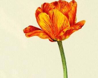 Botanical Tulip Print 3 | Free Shipping