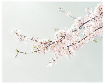 Girls Room Art Photography Print, Cherry Blossom Flower